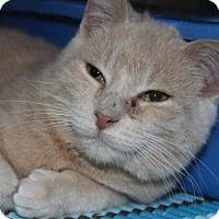 Adopt A Pet :: Vulcan - Caistor Centre, ON