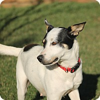 Adopt A Pet :: Annie - Flower Mound, TX