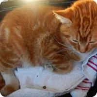 Adopt A Pet :: PERLA - San Antonio, TX