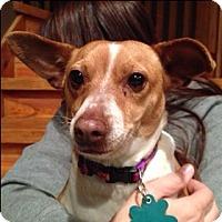 Adopt A Pet :: Mikayla - Alpharetta, GA