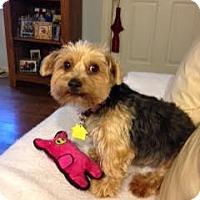 Adopt A Pet :: Daisy - Homestead, FL