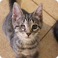 Adopt A Pet :: Agnes - Central Islip, NY