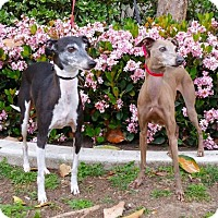Adopt A Pet :: Basil & Gio - FOSTER NEEDED - Carlsbad, CA
