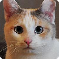 Adopt A Pet :: Callie - Duluth, GA