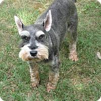 Adopt A Pet :: BARNEY (SRC#1811) IN NC - Lenoir, NC