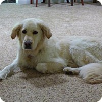 Adopt A Pet :: Fannie - Los Angeles, CA