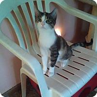 Adopt A Pet :: Juno - Montgomery, IL
