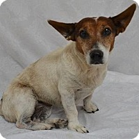 Adopt A Pet :: Cameo - Cincinnati, OH