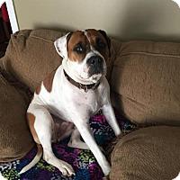 Adopt A Pet :: Marlee - Warminster, PA