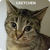 Adopt A Pet :: Gretchen - Lapeer, MI