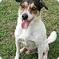 Adopt A Pet :: Perrito - Lufkin, TX