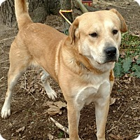 Adopt A Pet :: Chase - Capon Bridge, WV
