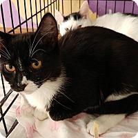 Adopt A Pet :: Myrrh - Middletown, NY