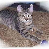 Adopt A Pet :: Chessie - Montgomery, IL