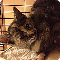 Adopt A Pet :: Harley - Clay, NY