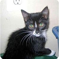 Adopt A Pet :: Wendi - Colmar, PA