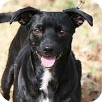 Adopt A Pet :: Meithrin - Austin, TX