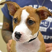 Adopt A Pet :: Jasper - Orlando, FL