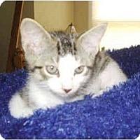 Adopt A Pet :: Heath Bar - Colmar, PA