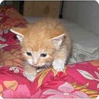 Adopt A Pet :: Richie Cunningham - Davis, CA