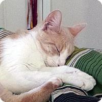 Adopt A Pet :: Athena - Irvine, CA