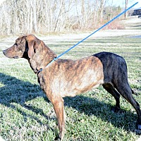 Adopt A Pet :: Sidney-URGENT - Providence, RI