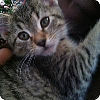 Adopt A Pet :: Ace - Trevose, PA