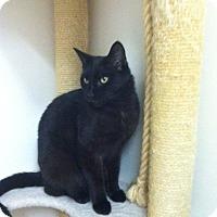 Adopt A Pet :: Vader - Bensalem, PA