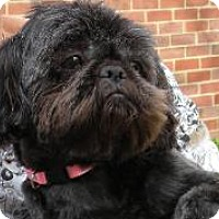 Adopt A Pet :: Mollie - LEXINGTON, KY