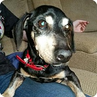 Adopt A Pet :: ABE LINCOLN - COURTESY POST! - Powder Springs, GA