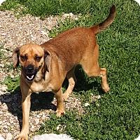 Adopt A Pet :: Sally - Prole, IA