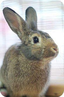 Rex for adoption in Centerville, Georgia - Mr. P