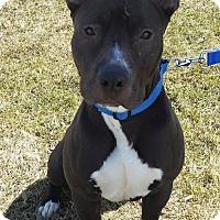 Adopt A Pet :: Maximus - Crete, IL