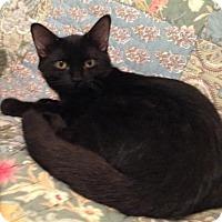 Adopt A Pet :: Marky - Fullerton, CA