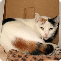 Adopt A Pet :: Utah - Milford, MA