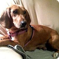 Adopt A Pet :: Sadie - Charlestown, RI