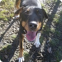 Adopt A Pet :: 1-3 Storm - Triadelphia, WV