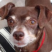 Adopt A Pet :: Teddy - Dayton, OH - Dayton, OH