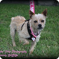 Adopt A Pet :: Frenchie - Lodi, CA