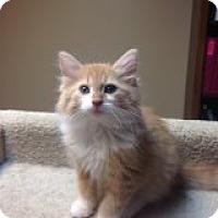 Adopt A Pet :: Waffle-COMING SOON! - Bridgeton, MO