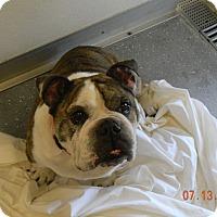 Adopt A Pet :: CHICO - Sandusky, OH