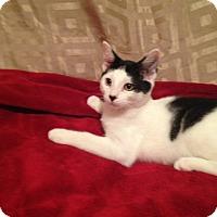 Adopt A Pet :: Chex - Simpsonville, SC