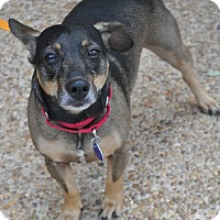 Adopt A Pet :: Joey - Atlanta, GA
