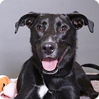 Adopt A Pet :: Izzy - Sudbury, MA