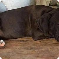 Adopt A Pet :: Kiwi - Dayton, OH