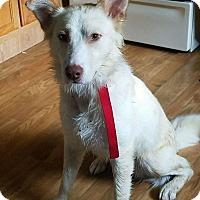 Adopt A Pet :: DEUCE - LaGrange, KY