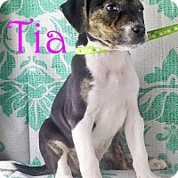 Adopt A Pet :: Tia - Griffin, GA