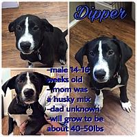 Adopt A Pet :: Dipper - Colmar, PA