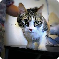 Adopt A Pet :: Callie - Casa Grande, AZ