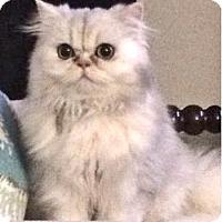 Adopt A Pet :: Maddy - Davis, CA